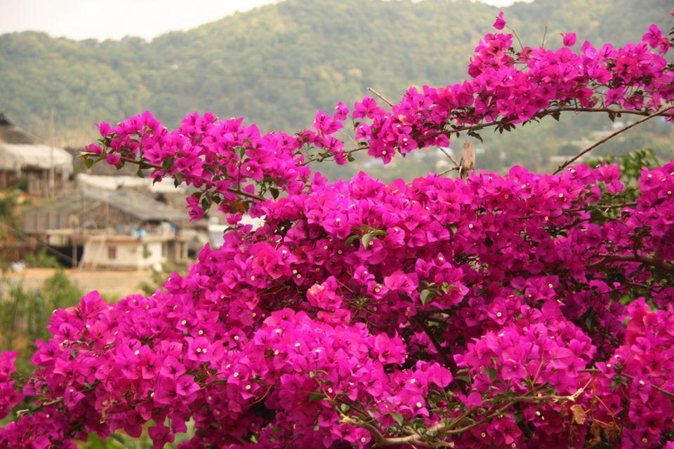 آشنایی با استان یوننان چین