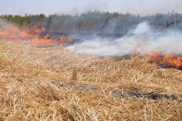 وقوع 10 مورد حریق مراتع و پوشش گیاهی طی یک روز در همدان