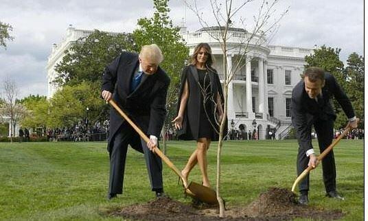 درخت دوستی ترامپ و مکرون خشک شد!