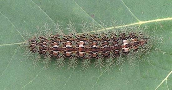 ترسناک ترین و خطرناک ترین حشرات دنیا را بشناسید