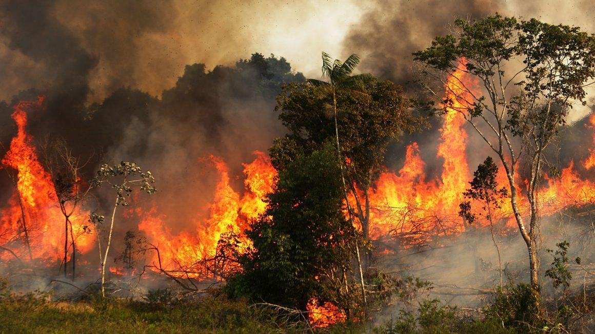 ادامه آتش سوزی های گسترده در جنگل های آمازون