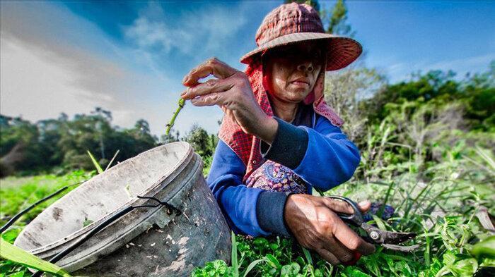 مبارزه با کرونا به سبک فقرای پرو