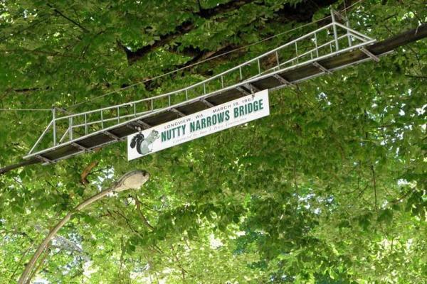 سفر به آمریکا: پل باریک فندقی برای سنجاب ها، واشنگتن