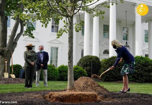 (ویدئو) درختکاری همسر بایدن با کفش پاشنه بلند